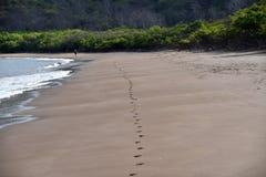 Voetafdrukken op het strand Royalty-vrije Stock Foto