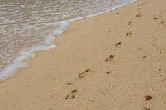 Voetafdrukken op het zand dichtbij Porto Covo, Portugal Royalty-vrije Stock Fotografie