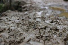 Voetafdrukken op modder Stock Fotografie