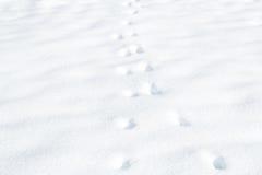 Voetafdrukken op witte sneeuw Royalty-vrije Stock Fotografie