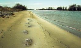 Voetafdrukken op zand Stock Foto