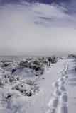 Voetafdrukken in sneeuw Royalty-vrije Stock Foto