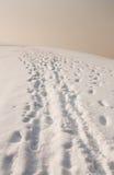 Voetafdrukken in sneeuw Stock Fotografie