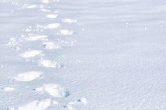 Voetafdrukken in Sneeuw stock foto's