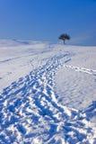 Voetafdrukken in Sneeuw die tot Boom leidt Stock Foto