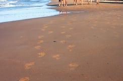 Voetafdrukken van mensen op het strand Royalty-vrije Stock Afbeeldingen