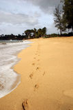 Voetafdrukken in zand 2 Stock Foto
