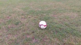 Voetbal op het gras in het park 4K stock video