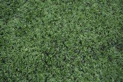 Voetbalgebied met natuurlijk gras in een stadion, lijn royalty-vrije stock afbeelding
