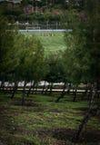 Voetbalpraktijk rond mooie aard stock afbeeldingen