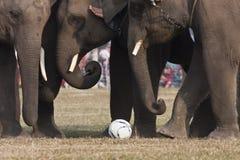 Voetbalspel - Olifantsfestival, Chitwan 2013, Nepal Stock Foto