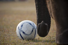 Voetbalspel - Olifantsfestival, Chitwan 2013, Nepal Royalty-vrije Stock Afbeeldingen