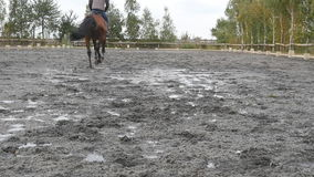 Voeten die van paard op modder lopen Close-up van benen van hengstjogging bij de natte modderige grond Jonge mensenhorseback het  stock footage