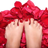 Voeten en roze-bloemblaadjes Royalty-vrije Stock Afbeelding
