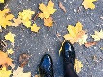 Voeten in mooie zwarte leer vlotte glanzende schoenen op gele en rode, bruine gekleurde natuurlijke de herfstbladeren op de bestr stock foto's