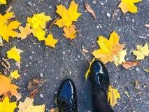 Voeten in mooie zwarte leer vlotte glanzende schoenen op gele en rode, bruine gekleurde natuurlijke de herfstbladeren op de bestr stock afbeeldingen