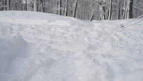 Voeten skiër die het sneeuw de winterbos doornemen stock video