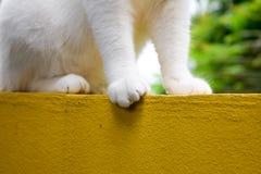 Voeten van witte kat op gele muur Royalty-vrije Stock Foto's