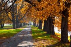 Voetgang en de herfstbomen Royalty-vrije Stock Foto's