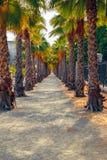 Voetgang met bomen en palmen Royalty-vrije Stock Foto's