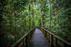 Voetgangersbrug in een regenwoud, Sandakan, Borneo, Maleisië Royalty-vrije Stock Afbeeldingen