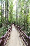 Voetgangersbrug in het Bos Stock Fotografie