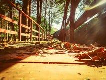 Voetgangersbrug in het de herfstpark Stock Afbeelding