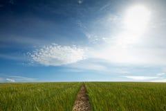 Voetpad aan horizon Stock Foto