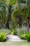 Voetpad aan onder tropische vegetatie Royalty-vrije Stock Fotografie