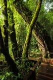 Voetpad binnen aan het bos Royalty-vrije Stock Foto's