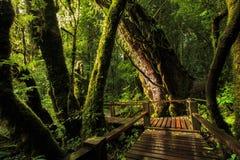 Voetpad binnen aan het bos in de ochtend, Nationaal Park Stock Foto