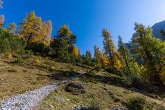 Voetpad in de herfst in gouden net bos in Zwitserse bergen stock afbeelding