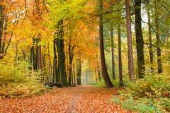 Voetpad in de herfstbos royalty-vrije stock afbeeldingen