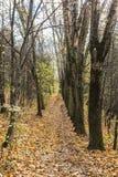 Voetpad in de herfstbos stock fotografie