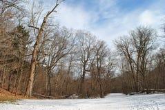 Voetpad in de winterbos Stock Foto's