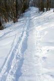 Voetpad in de winterhout Stock Foto