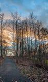 Voetpad die tot Mooie Zonsondergang achter Hout leiden Stock Foto's