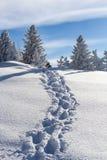Voetpad in diepe verse sneeuw Royalty-vrije Stock Afbeeldingen