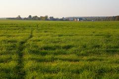 Voetpad door een grasrijke weide Stock Fotografie