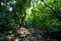 Voetpad door weelderige vegetatie van wildernis wordt omringd die Royalty-vrije Stock Foto's
