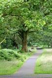 Voetpad in een bos, de bergen van Wicklow, Ierland Royalty-vrije Stock Foto