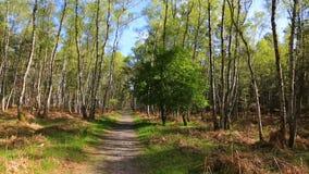 Voetpad in een groen bos stock video