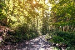 Voetpad in het bos Stock Foto