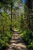 Voetpad in het de zomer bos Verticale kader stock fotografie