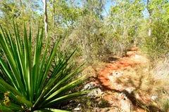 Voetpad in het Desembarco del Granma National Park op Cuba royalty-vrije stock afbeelding