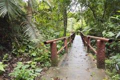 Voetpad in het nationale park van Khao Yai Stock Foto's