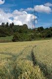 Voetpad in korrel en pylonen Stock Foto