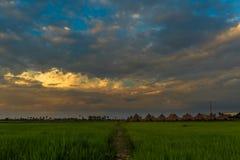 Voetpad in padievelden van Cambodjaans platteland royalty-vrije stock foto