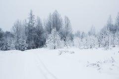 Voetpad in Russisch die de winterbos met sneeuw wordt behandeld Stock Afbeeldingen