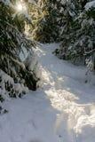 Voetpad in sneeuwbank, die door de het plaatsen avondzon wordt aangestoken Royalty-vrije Stock Fotografie